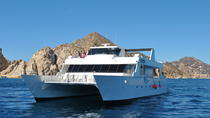 Whale Watching Cruise in Los Cabos, Los Cabos, Dolphin & Whale Watching