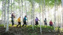 Full-Day Wondae-ri Birch Forest and Nami Island Hike from Seoul , Seoul, Hiking & Camping