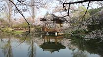 Gyeongju Cherry Blossom Festival with Historic Area(UNESCO World Heritage), Gyeongju, Day Trips
