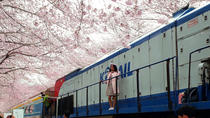 Jinhae Cherry Blossom Festival 1 Day Tour from Seoul, Busan, Day Trips