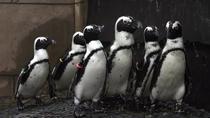 Long Island Aquarium Admission, Long Island, Attraction Tickets