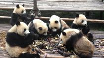2-Day Chengdu Private Tour Combo Package of Giant Pandas and Xi'an Terracotta Warriors, Chengdu, ...