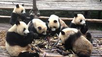 Private 2-Day Chengdu: Giant Pandas and Xi'an Terracotta Warriors, Chengdu, Private Sightseeing ...