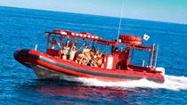 Maui Whale-Watching Tour by Raft, Maui, Dolphin & Whale Watching