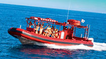 Maui Whale-Watching Tour van Raft, Maui, Dolphin & Whale Watching