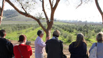 Guided Olive Mill Tour and Olive Oil Tasting with Food Pairings, Napa & Sonoma, Food Tours