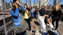 Small-Group Photography Walking Tour of NYC, New York City, Private Sightseeing Tours