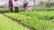 Tra Que Vegetable Village Half day (Private), Da Nang, Cultural Tours