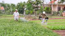Tra Que Vegetable Village (SIC), Da Nang, Cultural Tours