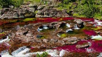 4-Day Tour to Caño Cristales from Medellin, Medellín