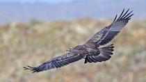 Birdwatching from Bogotá, Bogotá, Nature & Wildlife