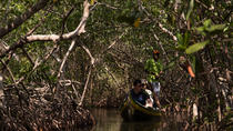 Canoe Trip in the Mangroves, Cartagena, Day Cruises