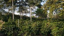 Medellín Coffee Farm Experience, Medellín, Coffee & Tea Tours