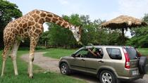 2-Day Tour: Auto Safari Chapín Zoo and Monterrico Black Sand Beach from Guatemala City or Antigua, ...