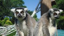 La Aurora Zoo Admission Ticket, Guatemala City, null