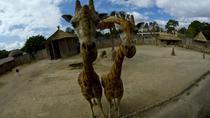La Aurora Zoo Admission with Transportation from Antigua, Antigua, Nature & Wildlife