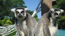 La Aurora Zoo Admission with Transportation from Guatemala City, Guatemala City, Nature & Wildlife