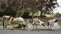 Privérit met paard en koets door Central Park, New York City, Horse Carriage Rides