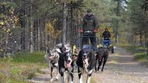 Autumn Husky Sit and Drive Cart Tour from Kiruna, Northern Sweden, 4WD, ATV & Off-Road Tours