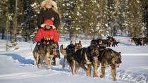 Husky Sled Drive and Ride Combo Tour from Kiruna, Central Sweden, 4WD, ATV & Off-Road Tours
