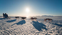 1-Hour Small-Group South Iceland Dog Sled-Ride, Reykjavik, New Years