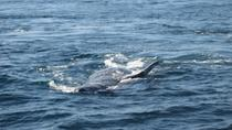 San Diego Half-Day Marine Wildlife Tour with Lunch, San Diego, Sailing Trips