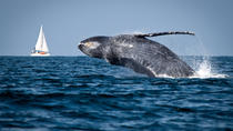 Whale Watching Punta Cana, Punta Cana, Day Cruises
