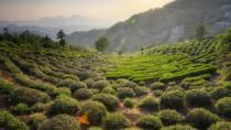 Private Hangzhou Tea Plantation Tour, Shanghai, Cultural Tours