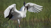 Private Tour: Birdwatching in Dongtan Wetland Park from Shanghai, Shanghai, Private Day Trips