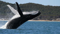 Hervey Bay Ultimate Whale Watching Cruise, Hervey Bay, Dolphin & Whale Watching