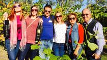 Swan Valley Tour from Perth: Wine, Beer and Chocolate Tastings, Perth, Lunch Cruises
