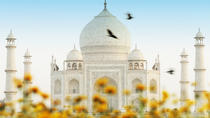 09 Days Golden triangle tour with golden temple Amritsar, New Delhi, Multi-day Tours