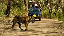 Khajuraho Day Tour: Jungle Safari at Panna National Park and Western and Eastern Temple, Khajuraho