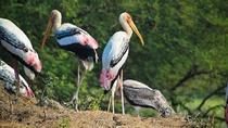 Kumarakom Bird watching Tour, Kochi, Private Sightseeing Tours