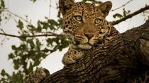 Narlai Leopard Safari and Village Walk Tour from Udaipur with Lunch, Udaipur, Day Trips