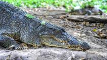 Private Eco-Tour: Crocodile Watching With Heritage Trail, Goa