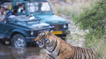 Private Tour des Nationalparks Ranthambore & 2 Übernachtungen ab Delhi, New Delhi, ...
