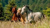 HORSEBACK RIDING IN LJUBLJANA, Ljubljana, Horseback Riding