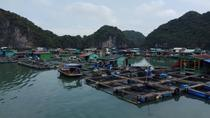 2 Days Ha Noi Cat Ba Lan Ha Bay on Emerald Cruise Premium depart from Ha Noi, Hanoi, Day Cruises