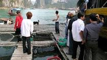 Cat Ba Cooking Class Go to Market with Seafood from Cat Ba Town, Northern Vietnam, Cooking Classes