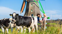 Dutch Windmills and Countryside Day Trip from Amsterdam Including Cheese Tasting in Volendam, ...