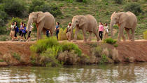 2-Day South African Wildlife Game Drive from Cape Town, Cape Town, Multi-day Tours