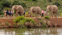 2-Day South African Wildlife Safari Guided Tour from Cape Town, Cape Town, Multi-day Tours