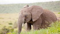 2-Day Western Cape Safari from Cape Town: Big Five Game Drive and Cango Wildlife Ranch, Cape Town, ...