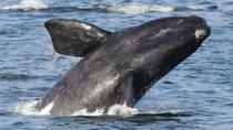 2-Day Whale Coast and Winelands Guided Tour from Cape Town, Cape Town, Multi-day Tours