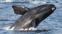 2-Day Whale Watching and Wine Tasting Tour from Cape Town, Cape Town, Full-day Tours