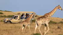 3-Day Garden Route Tour from Cape Town with Big Five Game Drive, Cape Town, Multi-day Tours