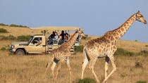 3-Day Garden Route Tour with Safari from Cape Town, Cape Town, Day Trips