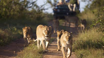 4-Day Private Safari at Kapama with optional Hot Air Balloon Ride, Kruger National Park, Multi-day...