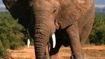 5-Day Garden Route Adventure Tour: Addo National Park, Jeffreys Bay, Wilderness National Park, ...
